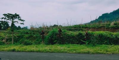 Tanah Siap Dibangun Kemuning Ngargoyoso Karanganyar