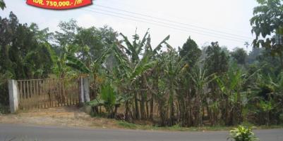 Jalan Raya Trawas Prigen Pasuruan - An Idyllic Location