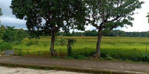 Tanah Bonus Rumah Sederhana Kedawung Sragen Telp/WA: 082327612345