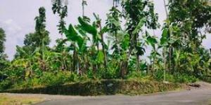 Tanah Datar Strategis Dibangun Vila Kerjo Karanganyar Telp/WA:082327612345