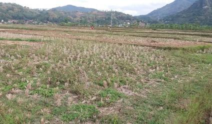 tanah murah untuk investasi