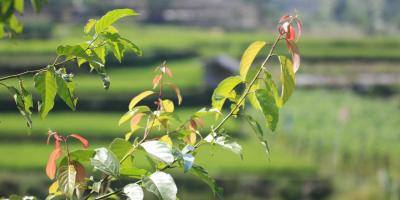 Kavling Walini Tea Garden