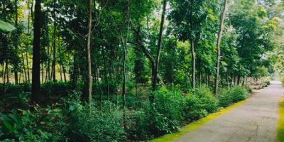 Tanah Kebun Jati Strategis Dibangun Rumah Tasikmadu Karanganyar