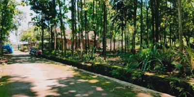 Tanah Datar Kebun Jati Kedawung Sragen