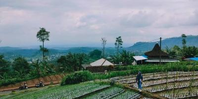 Tanah Idaman View Perbukitan Kebun Teh Kemuning Ngargoyoso Karanganyar