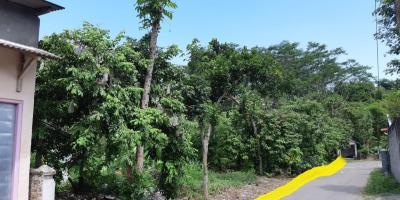 Butuh Uang, Tanah Pekarangan Dijual Ukutan 4.355 m2 Sanankulon Blitar