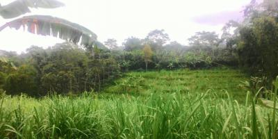 Jual tanah Kebun