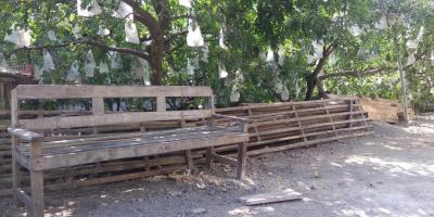 Dijual tanah bonus pohon belimbing Tanjungsari Blitar