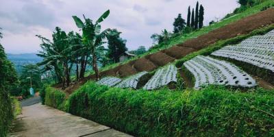 Tanah Strategis Dibangun Vila Kemuning Ngargoyoso Karanganyar